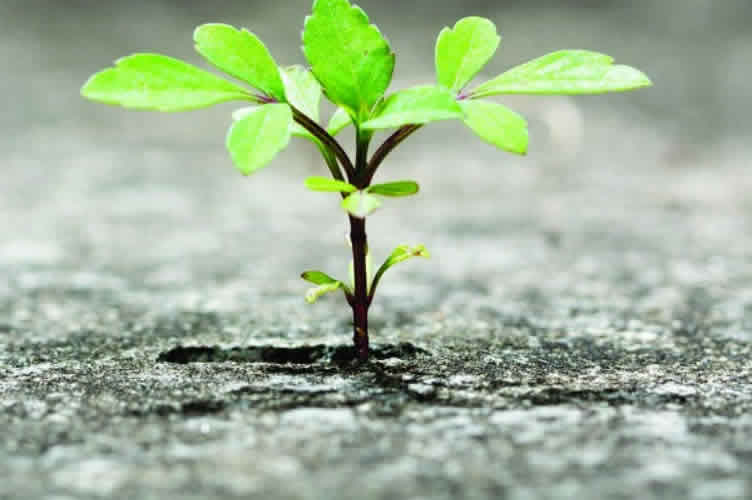 Flor nascendo no asfalto para simbolizar a resiliencia.