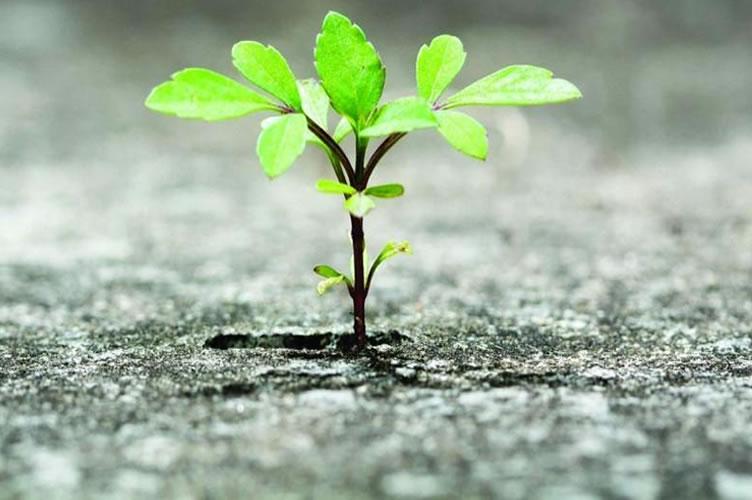 Para mostrar a resiliência que um gerente de locação precisa ter. Um planta, crescendo no asfalto.