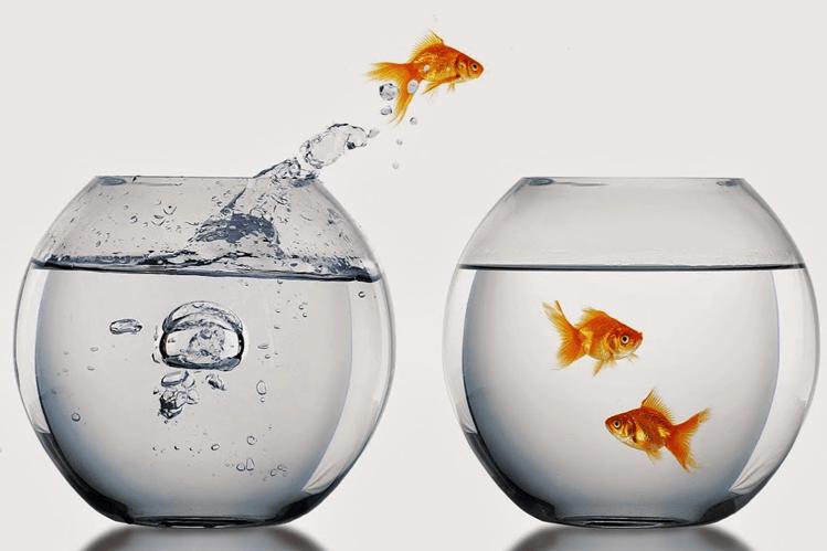 Peixe pulando para fora do aquario e indo para outro onde será melhor.