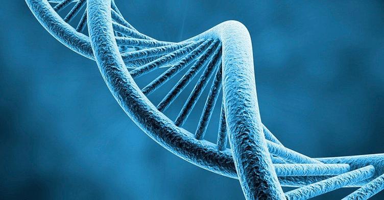 Modelo de Genoma, Código Genético. Simbolizando Perguntas que Ajudam a Traçar o Perfil do Cliente que Compra Imóvel